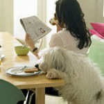 Top 10 ways to give your dog a balanced diet