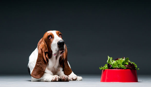 Dog-with-bowl-of-lettuce