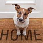 Top 12 Reasons Why You Should Adopt a Pet Dog