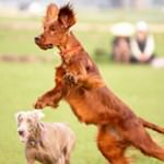 20 Tips to Control Your Hyperactive Dog