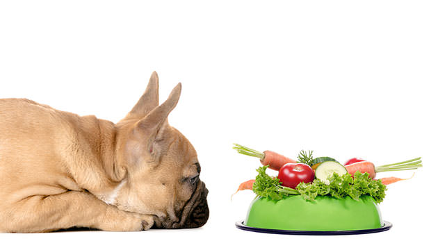 Healthy Dog Food Portions