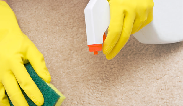 How To Remove Old Urine Stains From Your Carpet