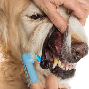 How To Make Homemade Dog Toothpaste