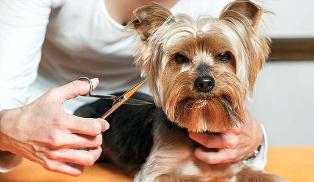 Can You Trim A Dog S Whiskers