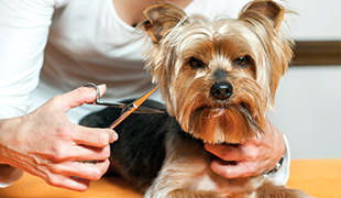 Dog's Whiskers – To Trim Or Not To Trim? - Dog Notebook