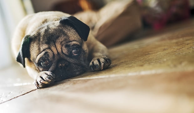 Dealing With A Crying Puppy At Night Dog Notebook