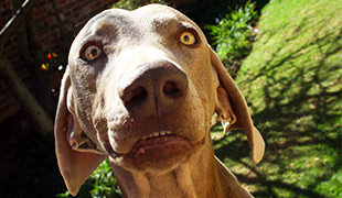 15 Strange Dog Behaviours And How To Deal With Them