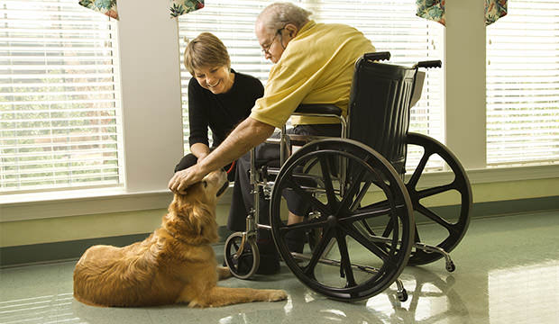 bigstock-Elderly-Man-With-Woman-Petting-6786075