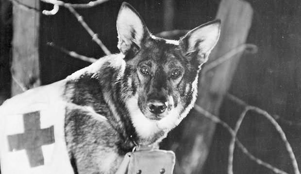 Rin-Tin-Tin-A-Dog-of-the-Regiment
