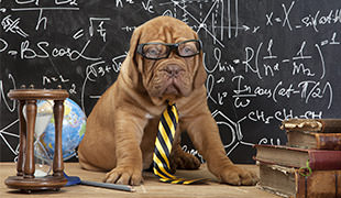 15 Most Intelligent Dog Breeds