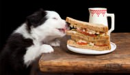 12 Foods We Eat That Can Harm Our Dogs