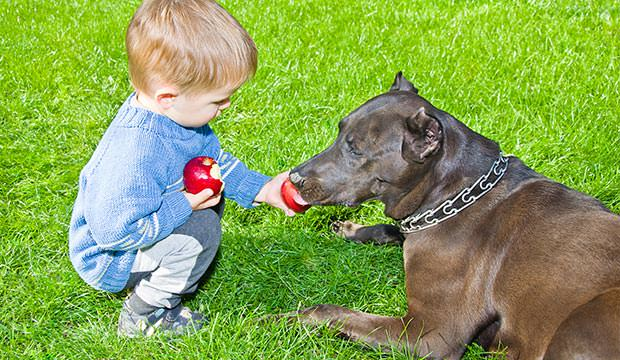 bigstock-Cute-boy-regales-to-a-dog-appl-61311095