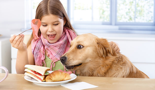 bigstock-Little-girl-and-pet-dog-having-33837710