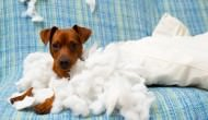 4 DIY Sprays To Prevent Your Pooch From Chewing