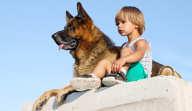 Top 15 Child Friendly Dog Breeds Page 2 Of 16 Dog Notebook