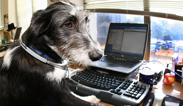bigstock-Dogs-At-Work-f