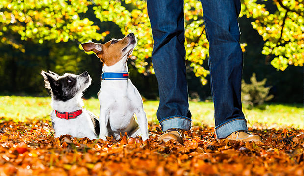 bigstock-Dogs-And-Owner-74099767