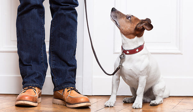 bigstock-Dog-And-Owner-54578267
