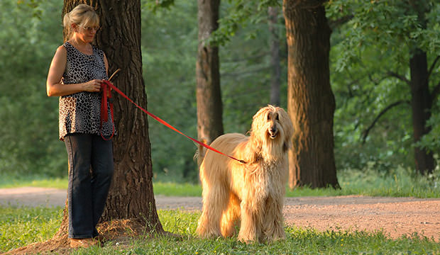bigstock-afghan-dog-and-woman-in-park-19625369