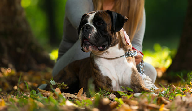 8-12-Most-Loyal-Dog-Breeds