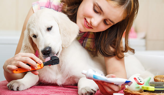 bigstock-Girl-cleaning-teeth-of-her-dog-82923308