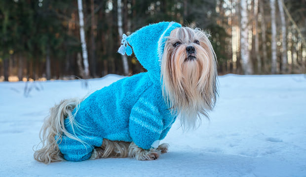 Dog Sweaters During Winter Do Dogs Really Need Them Dog Notebook