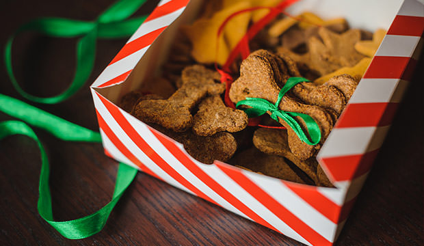 home-made-christmas-treats-for-your-dog