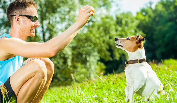 bigstock-dog-and-owner-training-142904756