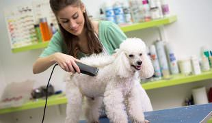 dog care jobs