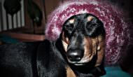 10 Silly Dogs Who Think They're People