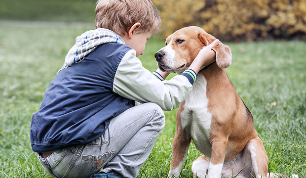 Children And Dogs: How A Child Should Approach A Dog