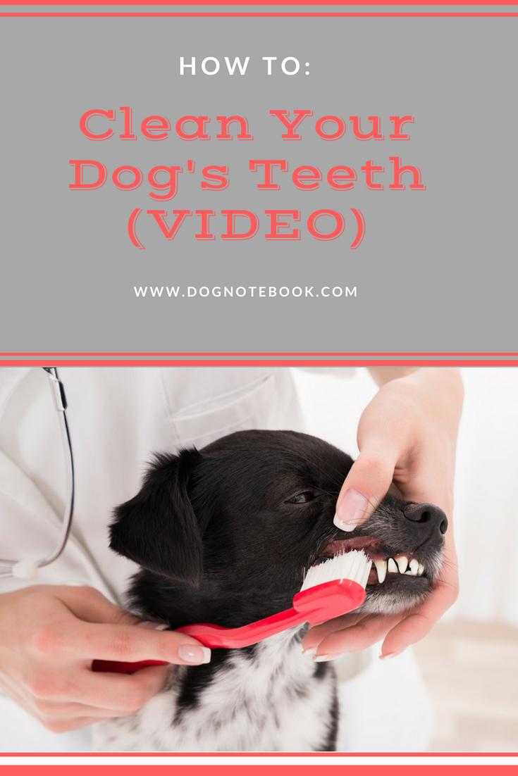 Soft Credit Check >> How To Clean Your Dog's Teeth (VIDEO) - Dog Notebook