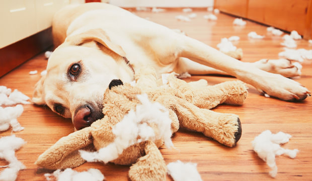 How to entertain your dog when not at home