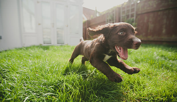 cutest photos of dogs