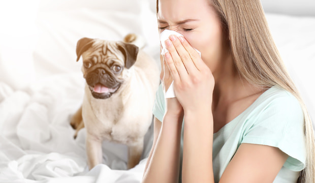Can I have a dog if I'm allergic