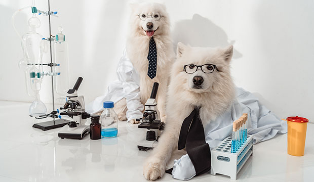 Dog DNA Testing - What You Should Know